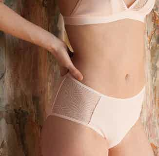 Savannah | Organic Cotton & Recycled Lace Brief | Pale Pink from Olly in Underwear, Women's Sustainable Clothing