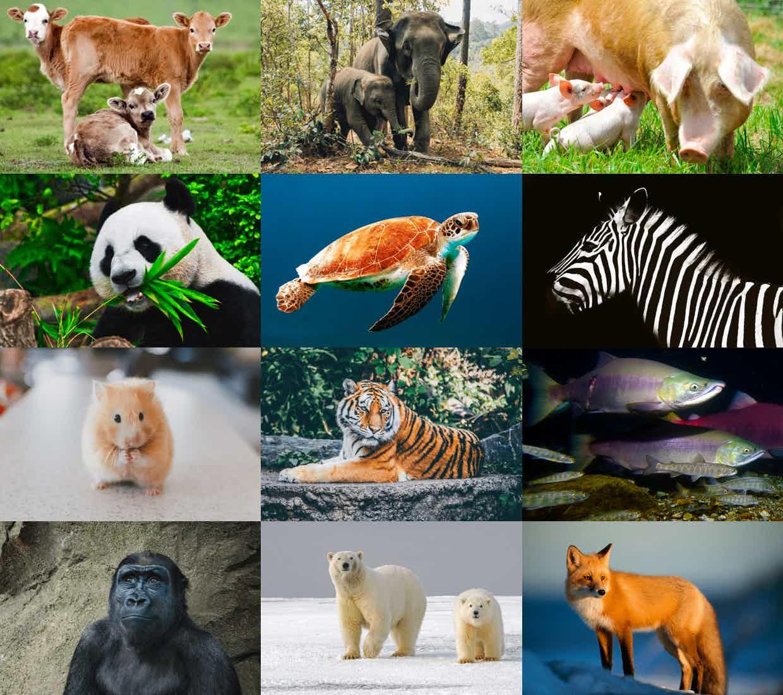 Animals and Wildlife - Cruelty Free Vegan